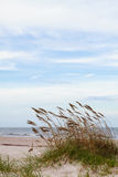 Песчанные дюны и овсы моря Стоковое Изображение RF