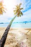Песчаный пляж каникул тропический с морем ладони и бирюзы стоковое изображение rf