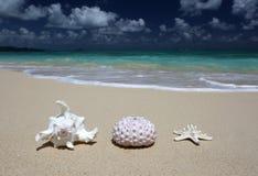 Песчаный пляж морских звёзд раковины мальчишкаа моря раковины моря Стоковое Фото