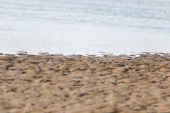Песчаный пляж предпосылки на реке Стоковое фото RF