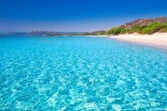Песчаный пляж Palombaggia с соснами и лазурной чистой водой, Корсикой, Францией стоковая фотография rf