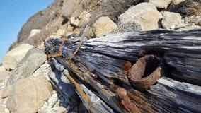 Песчаный driftwood слишком стоковая фотография rf