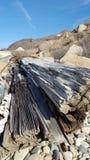 Песчаный driftwood стоковое изображение rf