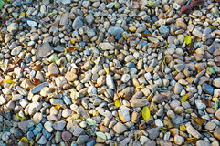 песчинка стоковые изображения