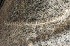 Петроглиф в Gobustan, Азербайджане Стоковое фото RF