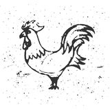 Петух нарисованный рукой на белой предпосылке Силуэт петухов _ Стоковая Фотография