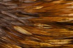 петух пер птицы Стоковая Фотография