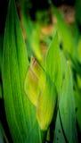 петушок цветка стоковые фото