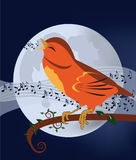 петь птицы Стоковые Изображения