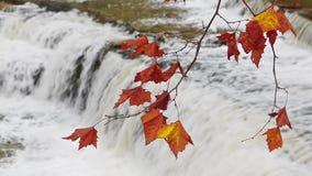 Петля листвы водопада