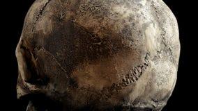 Петля крупного плана старого черепа вращая видеоматериал