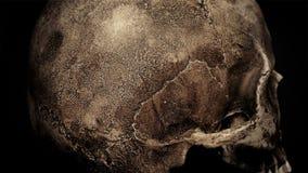 Петля крупного плана старого человеческого черепа вращая сток-видео