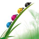 печатание ladybirds цвета Стоковая Фотография RF