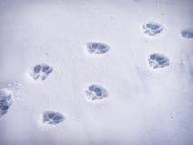 Печати лапки в снежке Стоковое фото RF