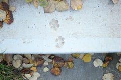 Печати лапки в цементе Стоковая Фотография