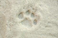 Печати лапки кота в песке Стоковая Фотография