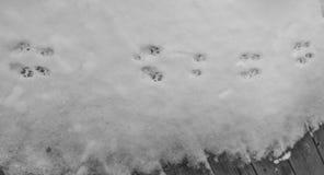Печати лапки кота в снеге Стоковые Фотографии RF