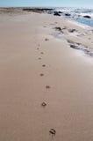 Печати лапки на пляже Стоковое фото RF