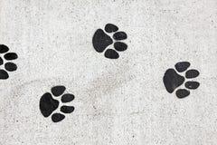 Печати лапки на тротуаре Стоковые Фотографии RF