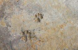 Печати лапки собаки Стоковые Изображения RF