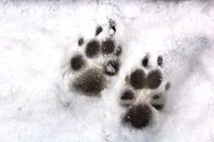 Печати животного в снеге Стоковая Фотография