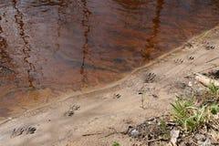 Печати дикого животного Стоковые Фото