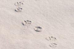 Печати и песок лапки собаки Стоковое фото RF