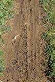 Печати колеса в грязи Стоковое Фото