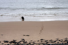 Печати лапки в песке Стоковые Фото