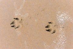 Печати лапки собаки во влажном песке стоковое изображение
