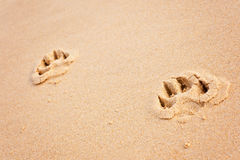 Печати лапки собаки на пляже Стоковые Изображения
