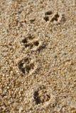 печати лапки собаки Стоковые Фото