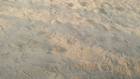Печати ноги птиц & человека на песке стоковые фотографии rf