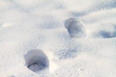 Печати оленей в глубоком древнем белом снеге Стоковое Изображение RF