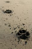 Печати собаки в фото песка Стоковое Изображение