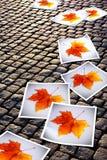 печати упаденные осенью стоковая фотография