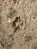 Печать лапки в грязи стоковая фотография rf