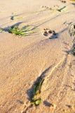 Печать лапки на пляже стоковое изображение
