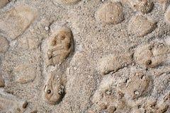 Печать ботинка футбола Стоковая Фотография RF
