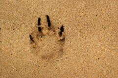 печать лапки собаки Стоковые Фото