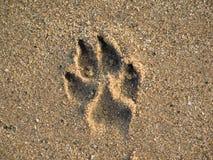 печать лапки собаки Стоковое Фото