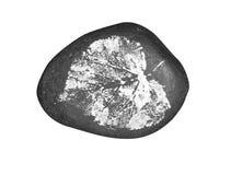 Печать на изолированном камне стоковые фото
