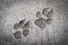 Печать ноги собаки на конкретном поле Стоковое фото RF