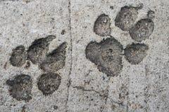 Печать ноги собаки на конкретном поле Стоковая Фотография