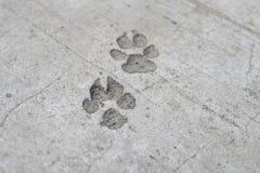 Печать ноги собаки на конкретном поле Стоковые Изображения RF