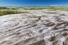Печать пешки на сухом песке моря во время отлива стоковая фотография