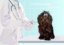 Veterinarian doctor. Dog on examination table in vet clinic. Vector cartoon illustration. Pets health care background. Domestic animals treatment concept stock illustration