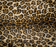 печать 2 леопардов Стоковая Фотография RF