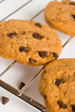 Печенье шоколада Стоковое фото RF