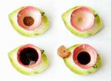 печенья кофе придают форму чашки фарфор Стоковые Фото